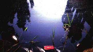 贵阳东郊一水渠受污染