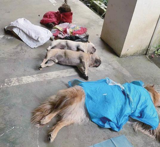 兴义一小区9只狗狗接连死亡 狗主人:地上发现疑似有毒骨头