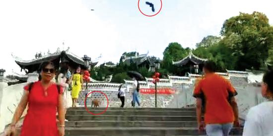 小鸟攻击猕猴。