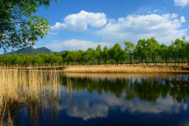 乌当区:今年森林覆盖率 目标瞄准55.93%