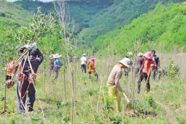 破坏森林资源 异地种植补偿