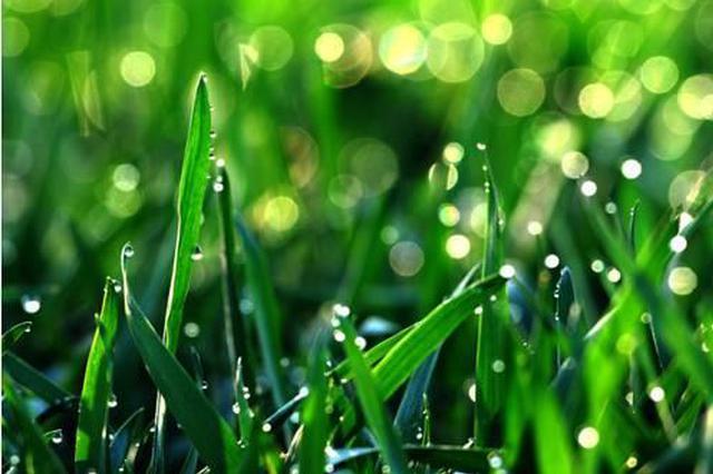 立夏时节降雨量已超谷雨一倍多