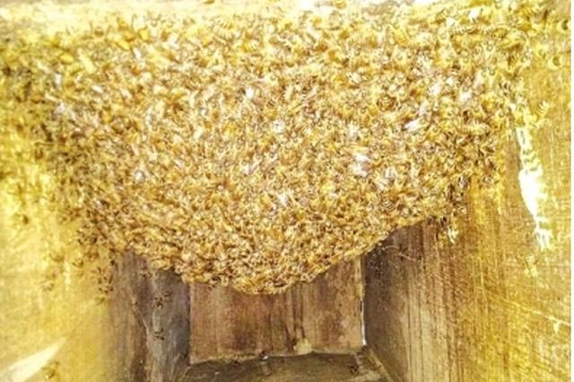深山筑巢引野蜂 村民赚起生态钱