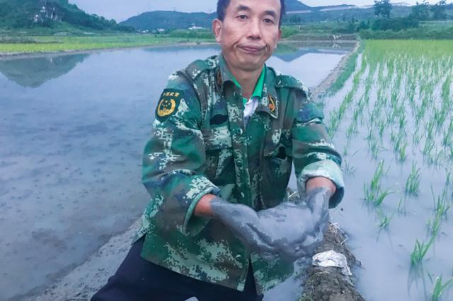 安顺:一条烂路污染 稻田竟成沙田
