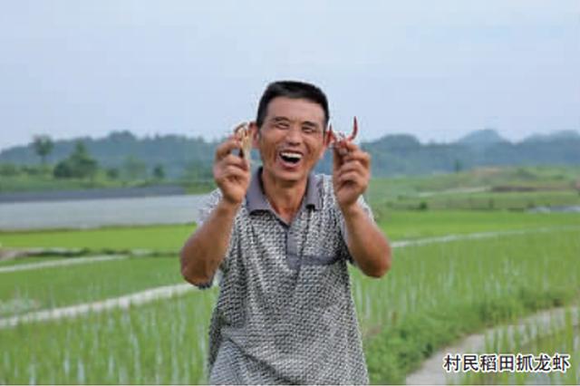 村民好奇养龙虾 而今成了新产业