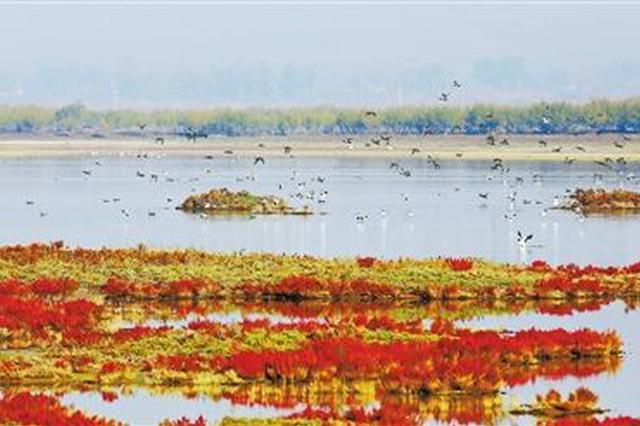 """""""湿地修复与全球生态安全""""主题论坛7月6日举行"""