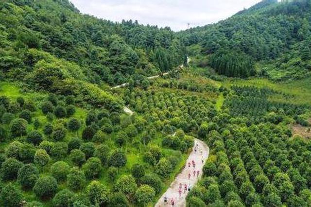 """贵州""""十大生态护林员""""黄开华 十五载用脚步丈量山林"""