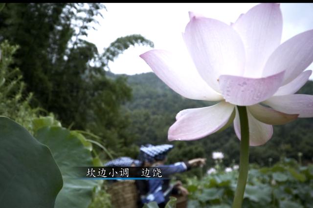 望谟非遗宣传片《王母的遗珠》发布