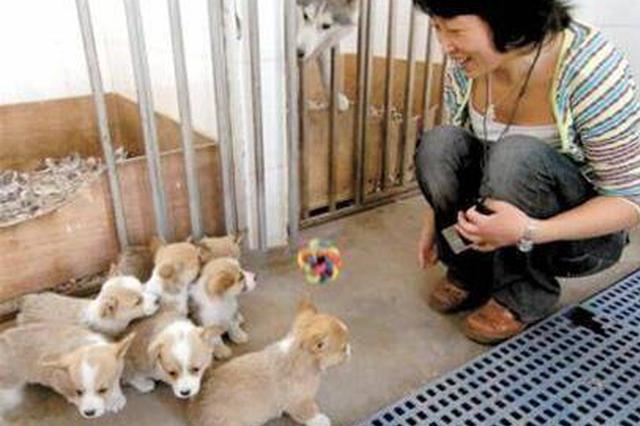 @遵义市民 养犬要实行登记了