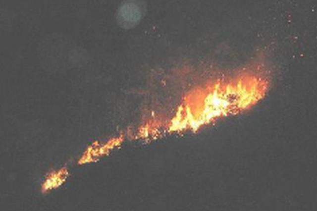 干活抽烟烧了475亩森林 男子犯失火罪领刑3年