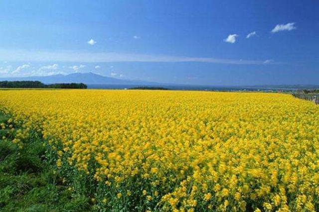 百余位国内中药材大咖 赴望谟共商菊花产业发展
