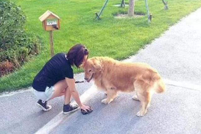 匯川區開展犬只整治行動 不文明養狗將被處罰
