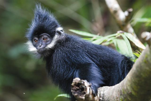 探秘黑葉猴棲息地 麻陽河國家級保護區