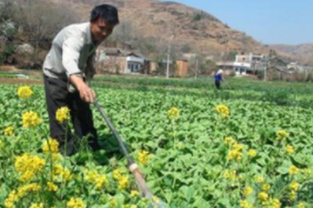 威宁自治县兔街镇龙洞村循环传统农业发展小记