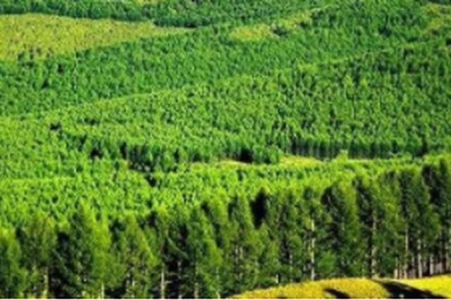 """织金县 """"四着力""""做强林业生态产业"""