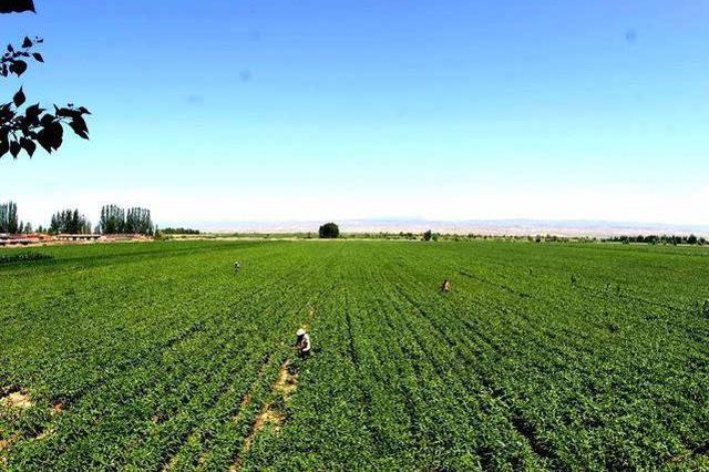 贵州将划定500亩以上坝区种植土地范围