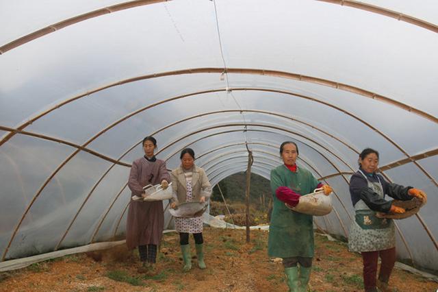 紫云:西瓜大棚农事忙 致富增收新希望