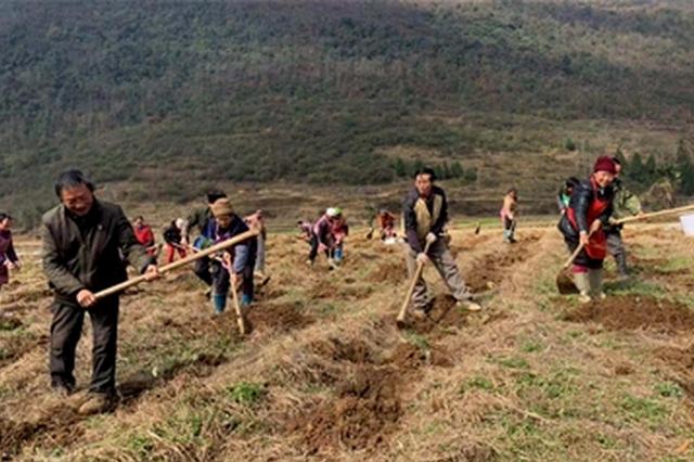 黔西县花溪乡 特色产业助农增收