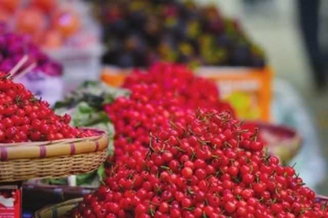 外地樱桃上市每斤70元 本地樱桃成熟还要等1个月左右