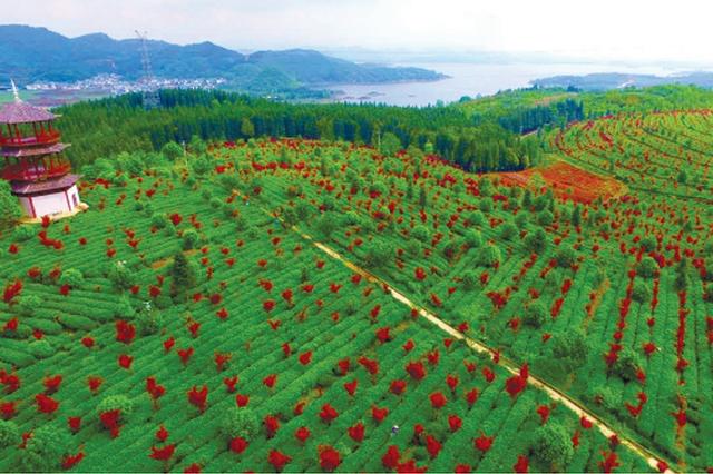 红枫湖畔有红枫