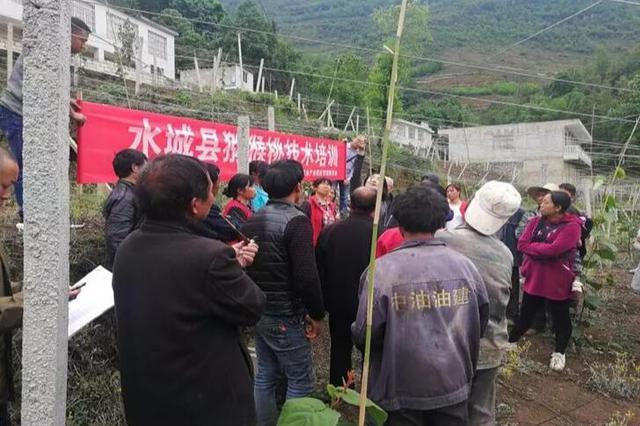 水城县技术培训护航猕猴桃产业持续健康发展