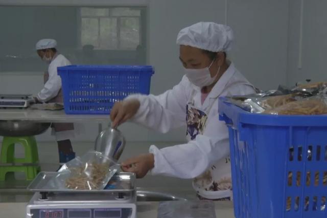 水城縣陡箐鎮易扶安置點500萬土豆項目投產