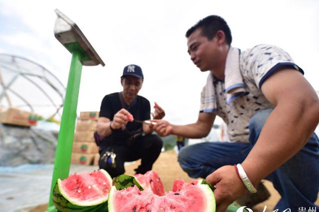 """贵州:""""甜蜜产业""""助力乡村振兴"""