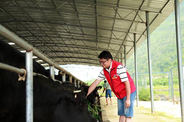 贵州关岭牛三年振兴纪实:做强牛品牌 开创致富路