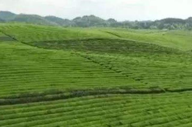 """贵州""""一减一增""""调农业结构促农村产业兴旺"""