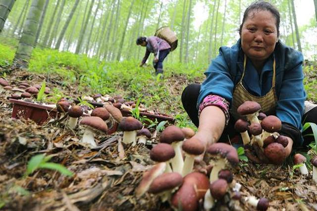 贵州:耕耘黔中大地 建设美丽田园