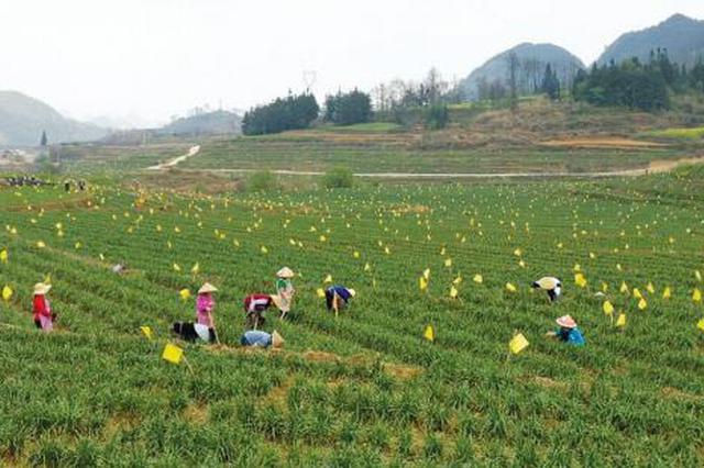 产业脱贫:振兴乡村动力源
