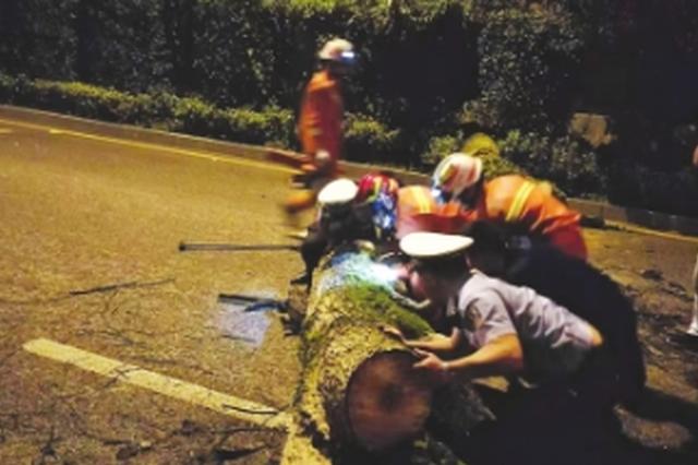 枯树倒下阻断甲秀南路 多部门联动伐木清除路障