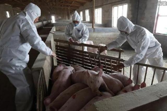 贵州5个县(市、区)非洲猪瘟疫情解除封锁