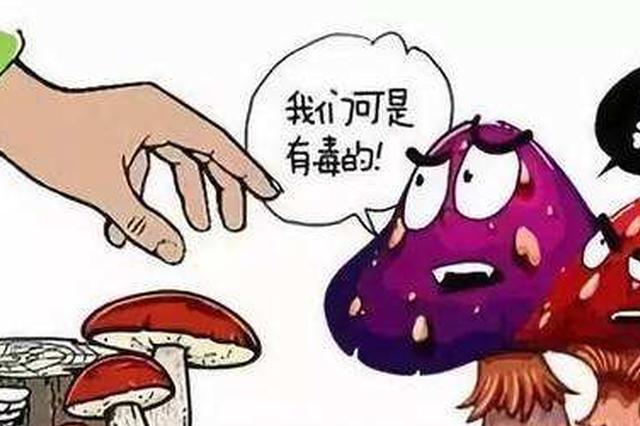 延中社区 宣传预防野生菌中毒知识