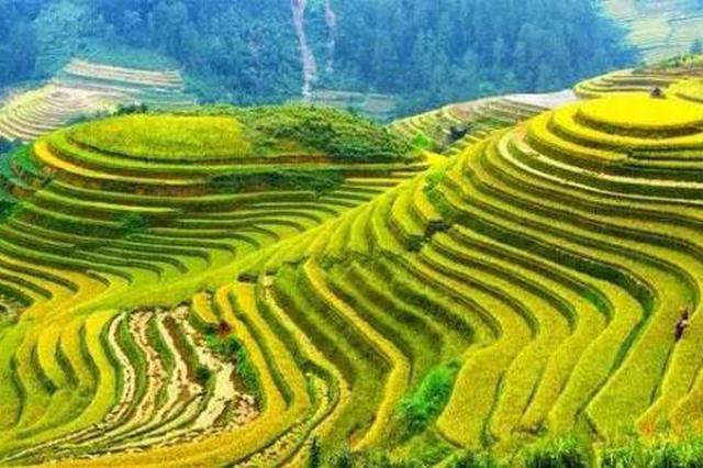 """贵州:让绿色""""织""""起多彩生活"""
