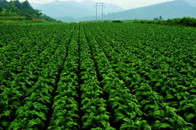 贵州地标农产品总数上百