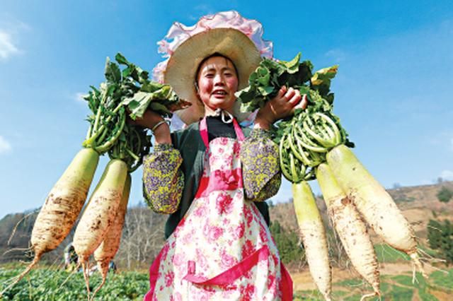 可乐猪、大白鹅……  贵州省地理标志奖励名单公布