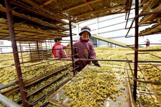 邮储银行施秉县支行千万贷款支持中药材产业