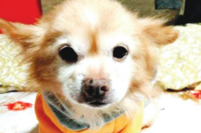 相伴15年的爱犬失踪 女主人哭肿了眼睛 希望热心人提供线索