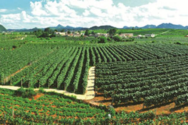 """贵州农村""""产业革命""""显成效 农民可支配收入突破万元"""