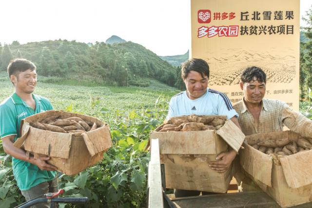 """拼多多设""""抗疫农货""""专区补贴5亿元力保农户收入"""