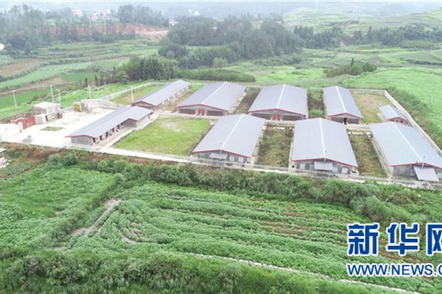 生猪产业助力贵州苗乡山村脱贫