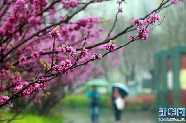 这一周,贵州春雨淅沥沥下个不停!