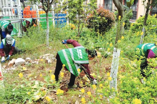 """部分业主执著要当""""菜农"""" 圈占小区绿地 开辟私家菜园"""