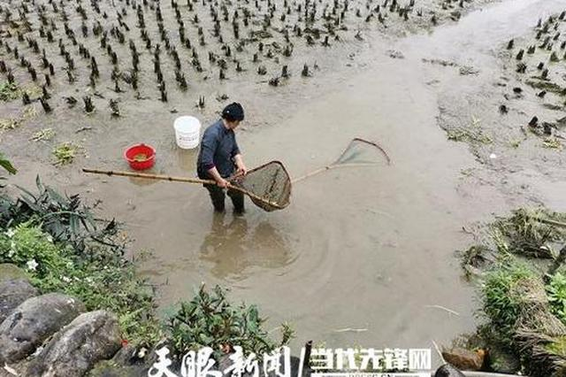 贵州生态渔业专班:抓住春季时节 推动提质增效