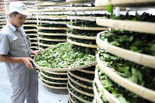 贵州网上茶博会销售金额已超4000万元