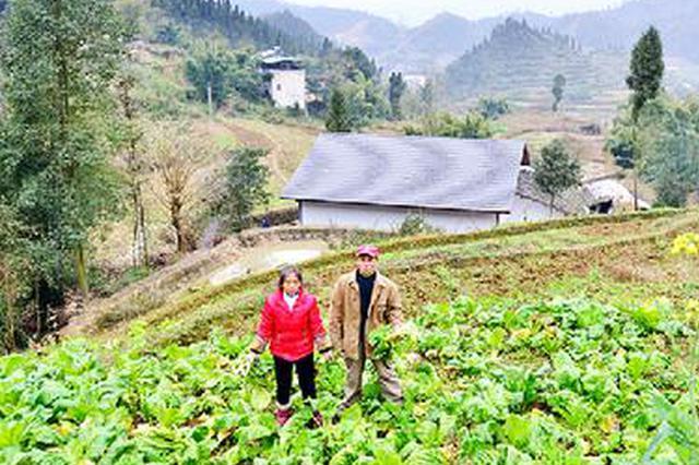 """贵州25支""""农技强兵""""助力发展贫困地区特色产业"""