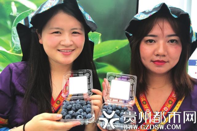 贵州蓝莓上市了!4个主产区邀您去品尝