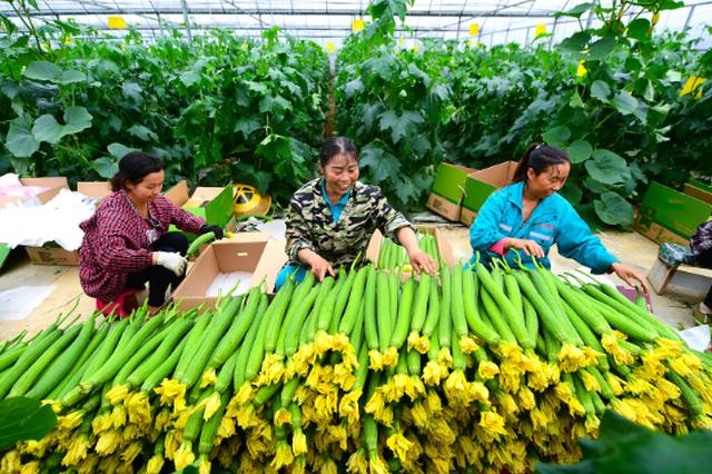 铜仁万山:高效农业让我们走上小康路