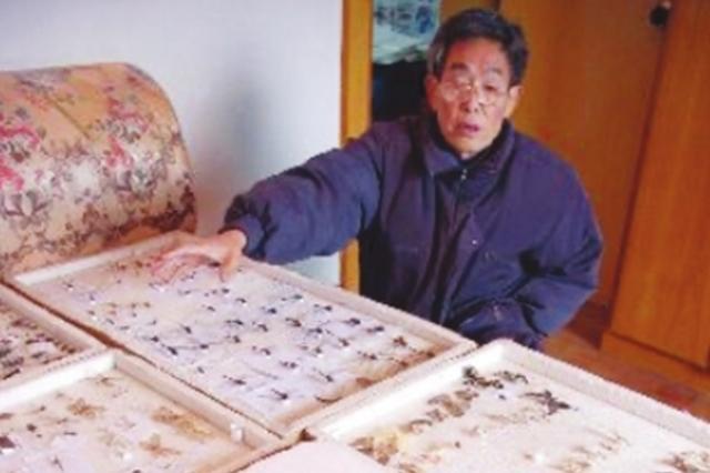 """20多年收藏5万余枚昆虫标本 """"蝴蝶爷爷""""将心爱的小虫子全捐"""